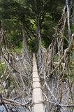 The  bridge in New Guinea Stock Photos