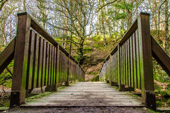 Bridge. An old wooden bridge in the forest Stock Photography