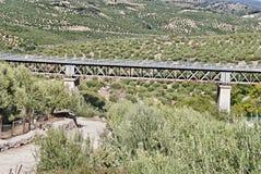 Bridge between olive. Trees in Cordoba, Spain Royalty Free Stock Photo