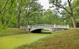 Bridge over the channel overgrown with green duckweed Royalty Free Stock Photo