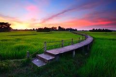 Bridge over the cornfield. Stock Photography