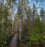 Bridge over the creek in autumn royalty free stock photo