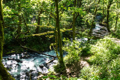 Bridge over creek. Situated in the Columbia River Gorge along Highway I-84 Royalty Free Stock Images