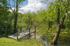 Bridge over green pond Stock Photos
