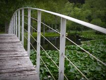 Bridge over the lake. Wooden bridge over a lake full of water lilies Stock Images