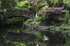 Bridge over pond. Bridge over a pond at Buddhapadipa Buddhist Temple, Wimbledon Parkside, London, England, United Kingdom Royalty Free Stock Image