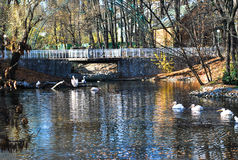 Bridge over a pond with pelicans Royalty Free Stock Photography