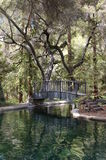 Bridge over Reflecting Pond. Wooden bridge over reflecting pond at St. Thomas Royalty Free Stock Photography