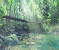 Bridge over a river in the jungle Royalty Free Stock Images