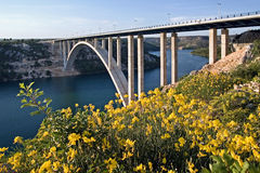 Krka bridge behind the broom flowers. Bridge over the river Krka on the highway A1 near town Skradin, Croatia Stock Photos