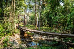 Bridge over the river in the rainforest Royalty Free Stock Photos