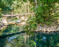 Bridge over the river in the rainforest Stock Image