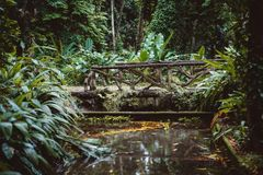 Bridge over small river in jungle. Mysterious pond with dry leaves in it in jungle forest with beautiful wooden authentic bridge over it; swampy terrain with Stock Photography