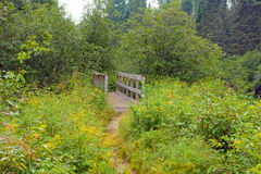 A bridge over a stream in a forest Stock Photo