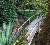 Bridge over a stream in tropical forest in Royalty Free Stock Images