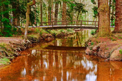 Bridge over stream in Winter Autumn Fall forest Royalty Free Stock Photography