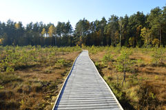 The bridge over the swamp. Wooden bridge through the middle of the swamp Royalty Free Stock Image