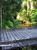 Bridge over Tropical Rainforest Creek Royalty Free Stock Photo