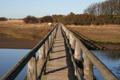 Bridge Over Water. A wooden Bridge in Nature reserve Royalty Free Stock Images