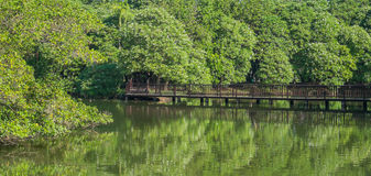 The bridge over the water to nature Stock Images