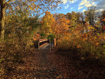 Bridge over the Wetlands on an Autumn Afternoon. Pedestrian bridge on trail through wetlands on a sunny autumn afternoon Stock Photos
