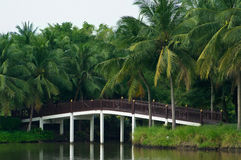 Bridge and palm trees. Small bridge of wood and concrete, surrounded by palm trees royalty free stock images