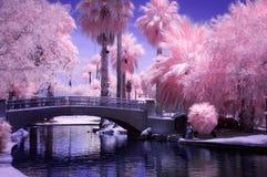 Bridge in park in infrared. Park bridge over pond in arizona Royalty Free Stock Photography