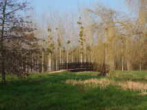 Bridge in the park. Leafless trees in the background (many poplars with mistletoe balls and one big wheeping willow). Green grass in the foreground. Beautiful royalty free stock photography
