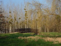 Bridge in the park. Leafless trees in the background (many poplars with mistletoe balls and one big wheeping willow). Green grass in the foreground. Beautiful royalty free stock photos