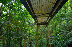 Bridge path in Daintree National Park Queensland, Australia. Bridge path in Daintree National Park in the tropical north of Queensland, Australia founded in 1981 stock photo