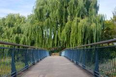 Bridge path with trees Royalty Free Stock Photo