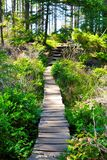 Bridge. Pathway though the forest Stock Photography
