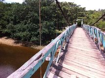 Bridge in Peru's Rainforest Royalty Free Stock Image