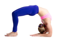Bridge pose on elbows Stock Images