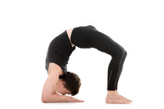 Bridge pose on elbows Stock Image