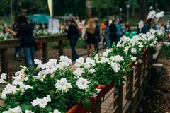 Bridge in public park with flowers, walking people on blurred background Royalty Free Stock Photography