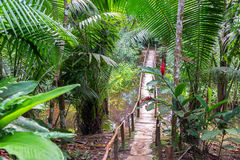 Bridge in a Rain Forest Stock Photo