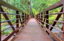 Bridge in rainforest Stock Photos