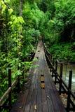 Bridge in rainforest Royalty Free Stock Image