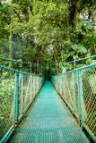 A bridge in the rainforest Stock Images