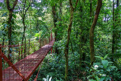 Bridge in Rainforest of Monteverde. Wide angle view of red hanging bridge in the Rainforest of Monteverde Royalty Free Stock Images