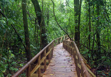 Bridge in rainforest Stock Image