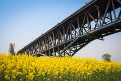 Bridge and rapeseed flower Stock Image