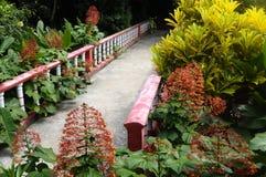 Bridge and red flowers in Tioman. Bridge through red flowers in Tioman island in Malaysia Stock Photos