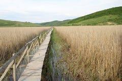 Bridge. Reed, bridge, swamp, road to nowhere, pathway, silence, nature Royalty Free Stock Image
