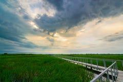 Bridge on rice field Stock Photos