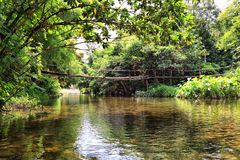 The bridge on the river in jungle royalty free stock image