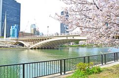 Bridge and Sakura Royalty Free Stock Photos