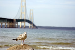 Bridge seagull landscape Stock Photography