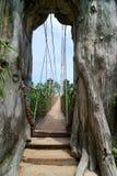 Bridge in Sentosa, Singapore stock image